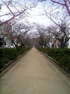鎌倉に来ました